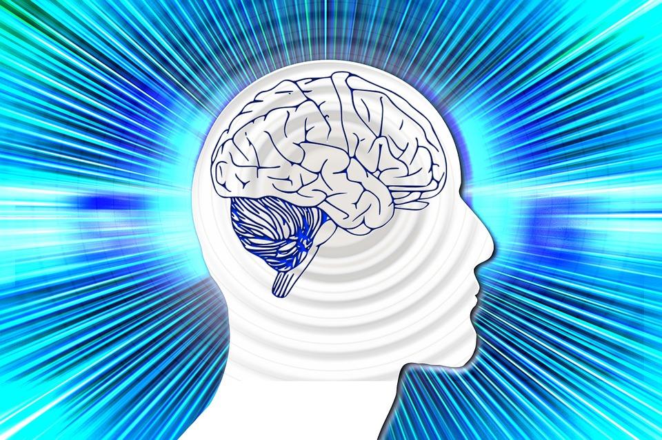 createyourownlives-how-brain-works